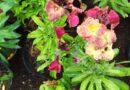 Ambiente municipal realiza colocación de plantines en diversos sectores